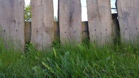 Trästaket med gräs Bakgrund för text Royaltyfri Fotografi