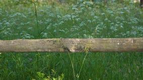 Trästaket och blommor och gräs i ängen arkivfilmer