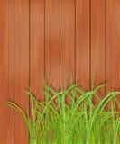 Trästaket och grönt gräs. fjädra bakgrund. Arkivbild