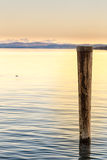 Trästolpe i sjön Arkivfoton