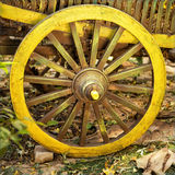 Trästort hjul på vagnen Arkivbilder