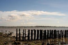 Trästrandförsvar på den Cudmore dungen Mersea Arkivfoto
