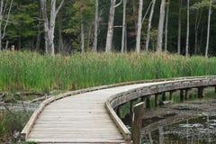 Trästrandpromenad över dammet Arkivbild