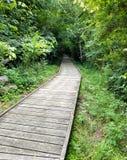Trästrandpromenad som leder in i skogen royaltyfria bilder