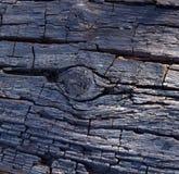 Trästruktur, gammalt träd Royaltyfri Fotografi