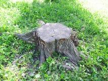 Trästubbe av ett träd Arkivbild