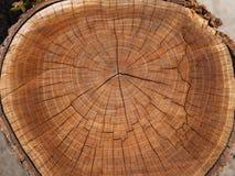 Trästubbe som isoleras på den vita bakgrunden Träd för runt snitt ner med årliga cirklar som en wood textur close upp royaltyfri fotografi
