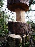 Trästubben som klipps ner trädlyme, parkerar Royaltyfri Foto