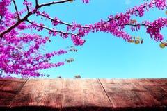 trätabell som är främst av landskap för vårblomningträd Produktskärm och presentation royaltyfria bilder