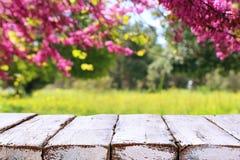 trätabell som är främst av landskap för vårblomningträd Produktskärm och presentation royaltyfri foto
