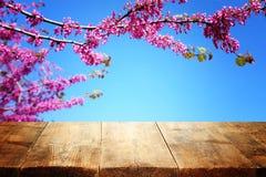 trätabell som är främst av landskap för vårblomningträd Produktskärm och presentation royaltyfria foton