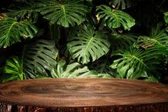 Tr?tabellen som ?r fr?mst av tropiska gr?na Monstera, l?mnar blom- bakgrund f?r produktsk?rm och presentation arkivfoton