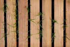 Trätegelplatta på grönt gräs för bakgrunds- och designkonstarbete Royaltyfria Bilder