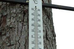 Trätermometer på det grova trädet royaltyfri fotografi