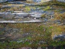 Trätextur av ett rutten träd och mossa, bakgrund och fundament fotografering för bildbyråer