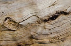 Trätextur med knotholes Arkivfoton