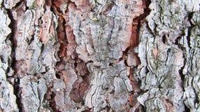 Trätextur, naturligt trädskäll Royaltyfri Fotografi