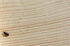 Trätextur sörjer brädeyttersidanärbild, bakgrund för design och garnering arkivfoton