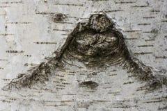 Trätexturbakgrundsträd i parkera Arkivfoto