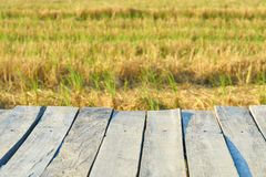 Trätexturbro för abstrakt tappning, tom gammal wood bro med landskapnaturen och suddig fältbakgrund Royaltyfri Foto