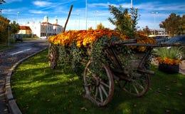 Träträdgård för hästvagnsblomma royaltyfri foto