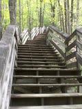 Trätrappa, i skogsmarkinställning Arkivbild