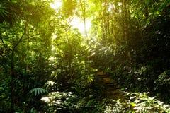 Trätrappa på djungel royaltyfri bild