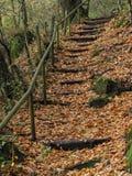 Trätrappuppgång i Sanen Pedro de Rocas Forest arkivfoton