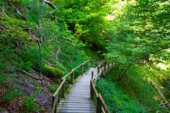 Trätrappuppgången i en skog Arkivbild