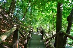 Trätrappuppgången i en skog i solljus Royaltyfria Bilder