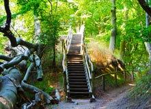 Trätrappuppgången i en skog i solsken Royaltyfri Foto