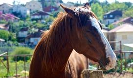 Träumen des Pferds Stockfoto