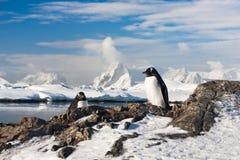Träumen mit zwei Pinguinen Lizenzfreie Stockbilder