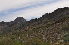 Träumerische Grün-Wüste des abgehobenen Betrages Stockbilder
