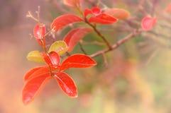 Träumerische herbstliche Blätter Stockbild