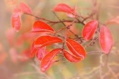 Träumerische herbstliche Blätter Lizenzfreie Stockfotos