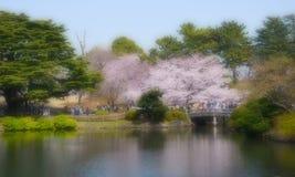 Träumerischer Effekt #9 Kirschblütes stockfoto