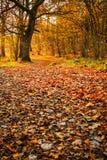 Träumerischer Herbsttag im Wald Stockfotos