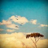 Träumerischer Himmel und Baum Stockfotos