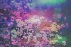 Träumerischer schöner Blumenhintergrund mit bokeh Lichtern Lizenzfreie Stockfotos