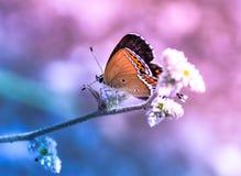 Träumerischer Schmetterling, der auf blauem Hintergrund des Blumenrosas sitzt lizenzfreie stockbilder