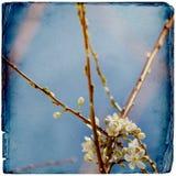 Träumerischer springflowers Hintergrund stockfoto