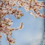 Träumerischer springflowers Hintergrund stockfotografie