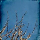 Träumerischer springflowers Hintergrund stockfotos