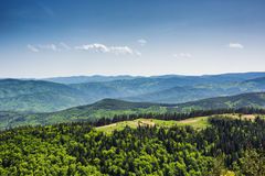 Träumerischer Waldfrische grüne Bäume im schönen Gebirgsholz Lizenzfreies Stockfoto