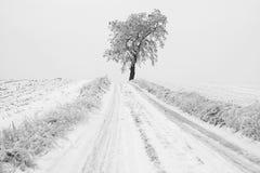 Träumerischer Winter-Weg Stockfotos