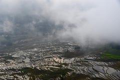 Träumerischer Yuan Yang unter dem Nebel Stockfotografie