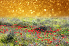 Träumerisches abstraktes Mohnblumenfeld mit Funkeln beleuchtet Hintergrund Stockbild