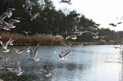Träumerisches Bild einiger Seemöwen, die über den Fluss fliegen Stockbild