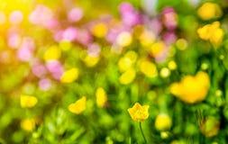 Träumerisches Blumen bokeh mit Blendenfleck Lizenzfreie Stockbilder